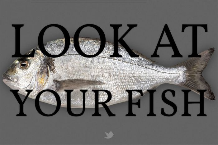 look-at-your-fish